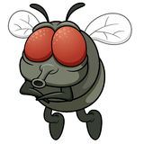 Cartoon fly Royalty Free Stock Images