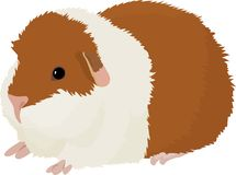 Vector illustration of cartoon guinea pig. Royalty Free Stock Photos