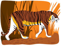 Vector illustration of cartoon tiger. Stock Photos