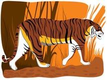 Vector illustration of cartoon tiger. Stock Photos