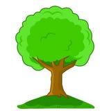 Vector illustration Cartoon tree isolated. On white background Stock Photos