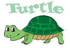 Vector illustration of a cartoon turtle Royalty Free Stock Images