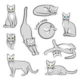 Vector illustration of cats Royalty Free Stock Photography