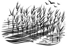 Vector illustration of cattails. Scene with river grass and water waves in the pond. Royalty Free Stock Photo