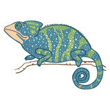 Vector illustration of chameleon isolated on white Stock Photos