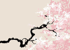Vector illustration of cherry blossom Stock Images