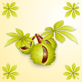 Vector illustration of chestnut branch and leaves Royalty Free Stock Image
