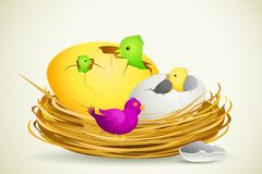 Chick in Egg Shell Stock Image
