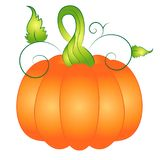 Cartoon Autumn Pumpkin Vector Illustration Clipart Stock Photography