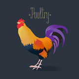 Vector illustration of cock, rooster Royalty Free Stock Photos