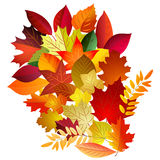 Vector illustration of color autumn leaves bouquet on white  Stock Image
