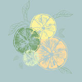 Vector illustration of color orange slices with leaves Stock Photo