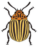 Vector illustration of colorado potato beetle Stock Photography