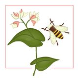 Vector illustration of colored buckwheat with bumblebee vector illustration