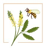 Vector illustration of colored melilot or sweet clover with bee royalty free illustration