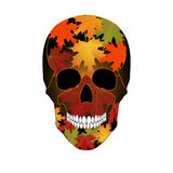 Vector illustration of colored skull Royalty Free Stock Photography