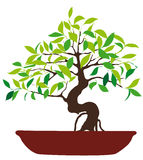 Vector Illustration of colorful bonsai tree. Hand drawn Vector Illustration of colorful bonsai tree in a pot isolated on white background Royalty Free Stock Photo