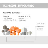 Vector illustration of colorful flat design style forest mushroo. M infographic with mushroom names and benefits for health as a template for your design Stock Photography