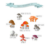 Vector illustration of colorful flat design style forest mushroo Stock Photo