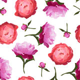 Vector illustration of colorful peonies flowers seamless pattern. Royalty Free Stock Images