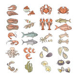 Vector illustration. Colorful seafood icon set isolated on white Royalty Free Stock Image