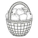 Vector illustration for coloring. Thanksgiving Day. Harvest of apples and pears in a basket Stock Photography