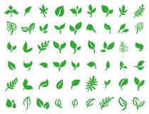 Vector illustration concept of green leaves. Colorful on white background vector illustration