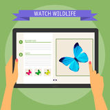 Vector illustration concept of hands holding modern digital tablet and pointing on screen with website about wildlife. Flat design Royalty Free Stock Image