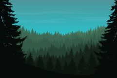 Vector illustration of a coniferous forest with trees. Under a green blue sky with clouds Royalty Free Stock Photo