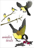 Vector illustration of a couple of winter birds sitting on branch Royalty Free Stock Photo