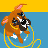 Vector illustration of cute Boxer puppy with leash Royalty Free Stock Photo