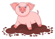 Vector illustration of cute pig in a puddle Royalty Free Stock Photography