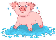 Vector illustration of cute pig in a puddle, funny piggy Stock Image