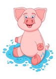 Vector illustration of cute pig on water puddle Stock Photo
