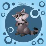 Vector illustration of cute raccoon vector illustration