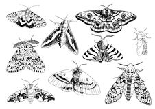 Vector illustration of czech moths Royalty Free Stock Photography