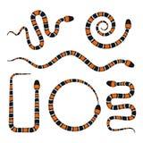 Vector Illustration 3d von Coral Snake oder von Micrurus, die auf Weiß lokalisiert werden Stockfoto