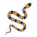Vector Illustration 3d von Coral Snake oder von Micrurus, die auf Weiß lokalisiert werden Lizenzfreie Stockfotos