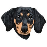 Vector illustration of a Dachshund dog for a Christmas card. Merry Christmas in the year of the dog royalty free illustration