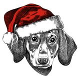 Vector illustration of a Dachshund dog for a Christmas card. Dachshund in the red cap of Santa Claus. stock illustration