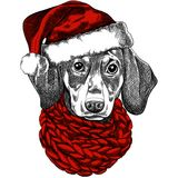 Vector illustration of a Dachshund dog for a Christmas card. Dachshund with a red knitted warm scarf and a santa hat stock illustration