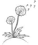 Vector illustration. dandelion. Black outline sket Royalty Free Stock Images