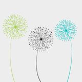 Vector illustration dandelion Stock Images