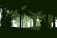 Vector illustration of a deciduous and coniferous forest. In several layers, isolated on a white background royalty free illustration