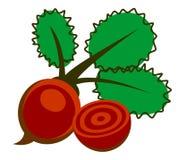 Vector Illustration der roter Rübe, über weißem Hintergrund Lizenzfreies Stockbild