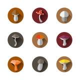 Vector Illustration des bunten flachen Designart-Wald-mushroo Stockfotos