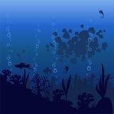 Vector Illustration des Seefisches auf einem blauen Hintergrund Lizenzfreies Stockbild