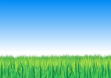 Vector illustration of detailed grass leaves on a Stock Image