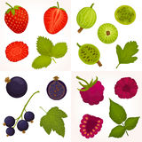 Vector illustration of different berries. Vector set of berries. Collection of raspberries, strawberries, gooseberries and black currants. A detailed image of stock illustration