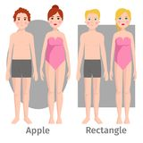 Vector illustration of different body shape types characters standing beauty figure cartoon model. Vector illustration of different body shape types. Characters stock illustration